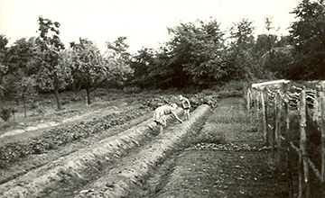 Der ehemalige Gemüsegarten um 1935, heute befindet sich hier der Parkplatz von Mein Parken.